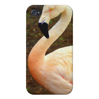 Pink Pair iPhone 4/4S Cover