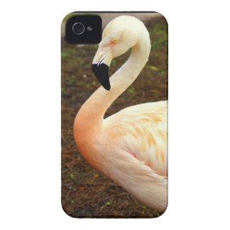 Pink Pair iPhone 4 Case-Mate Cases