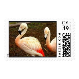 Pink Pair Postage
