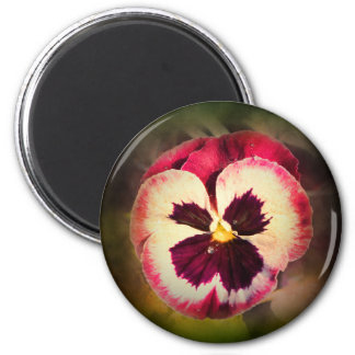 Pink Pansy With Water Droplets Magnet