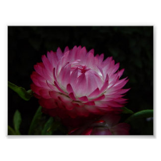 Pink Paper Daisy Canvas Print