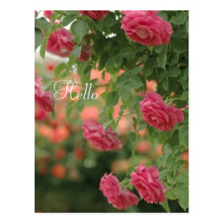 Pink Passion Post Card