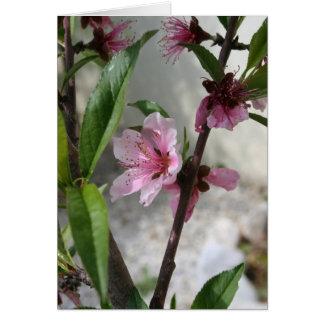 Pink Peach Blossom Greeting Card