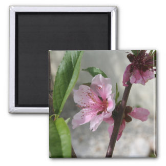 Pink Peach Blossom Magnets