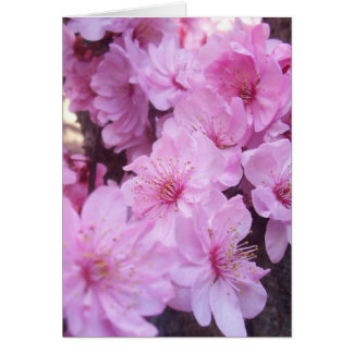 Pink Peach Blossoms Cards