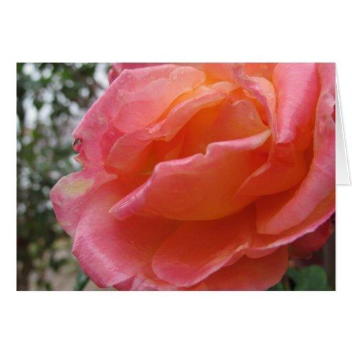 Pink Peach Rose Greeting Card