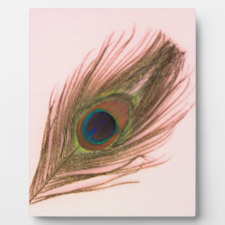 Pink Peacock Feather P Plaque