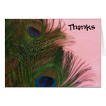 Pink Peacock Feathers Wedding Thank You Stationery Note Card