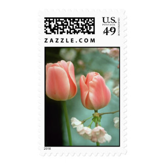 Pink Peer Gynt Triumph tulips flowers Postage Stamp