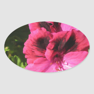 Pink Pelargonium blossom Oval Sticker