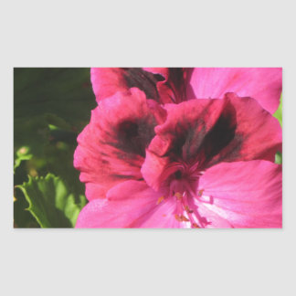 Pink Pelargonium blossom Rectangular Sticker