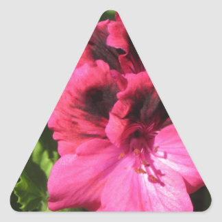Pink Pelargonium blossom Triangle Sticker