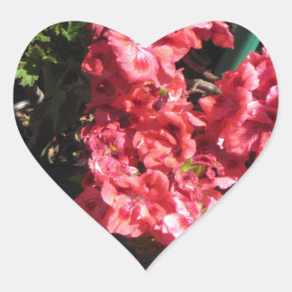 Pink Pelargonium flowers Heart Sticker