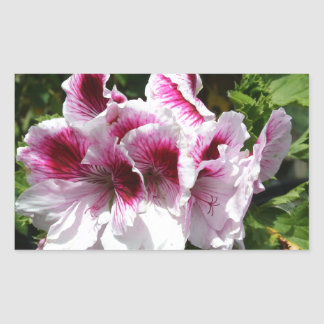 Pink Pelargonium flowers Rectangular Sticker