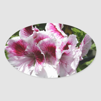 Pink Pelargonium flowers Stickers
