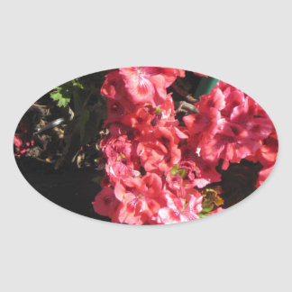 Pink Pelargonium flowers Oval Sticker
