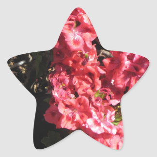 Pink Pelargonium flowers Star Stickers