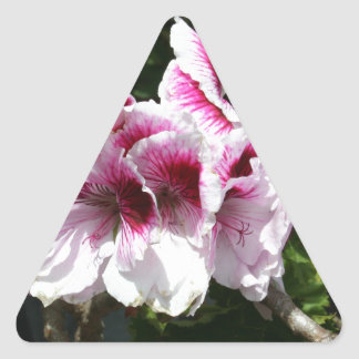 Pink Pelargonium flowers Triangle Sticker