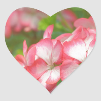 Pink pelargonium heart stickers