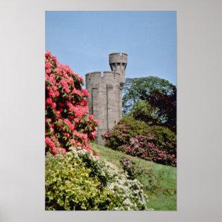 Pink Penrhyn Castle flowers Poster