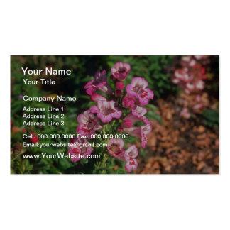 Pink Penstemon (Penstemon Gloxiniodes) flowers Business Card