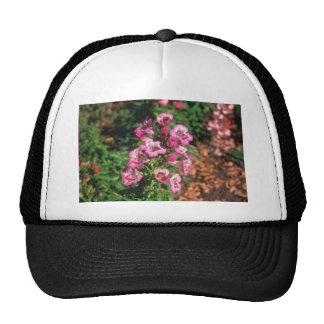 Pink Penstemon (Penstemon Gloxiniodes) flowers Hats