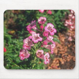 Pink Penstemon (Penstemon Gloxiniodes) flowers Mouse Pad