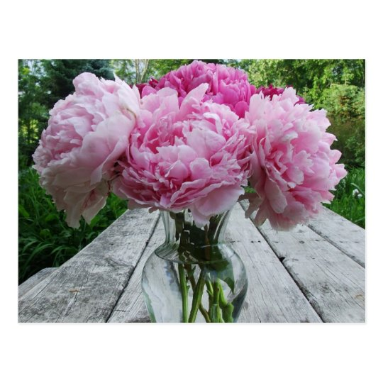 Pink Peonies Peony Flowers Arrangement In Vase Postcard