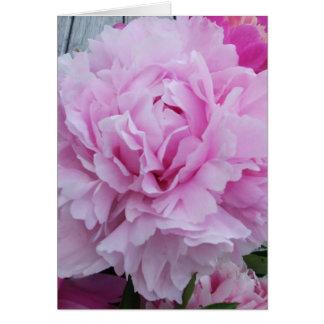 Pink Peonies / Peony Greeting Card