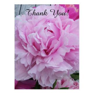 Pink Peonies Peony Thank You Postcard