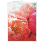 Pink Peonies -- pretty in pink! Greeting Card