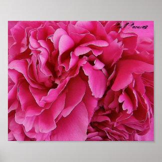'Pink Peonies' Print Poster