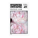 Pink Peonies Stamp