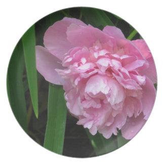 Pink Peony Blossom - Photograph Plates