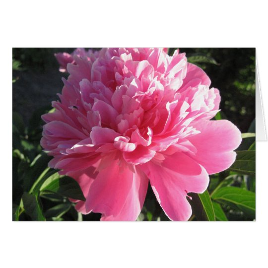 Pink Peony Card