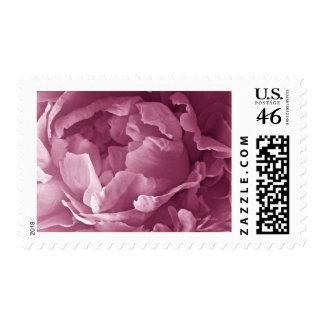 Pink Peony Closeup Stamps