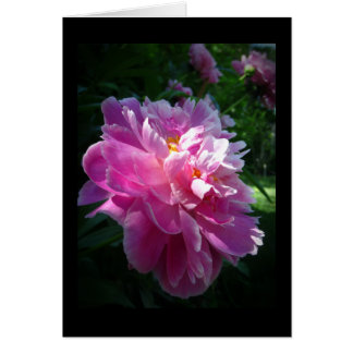 Pink Peony flower, Blank Greeting Card