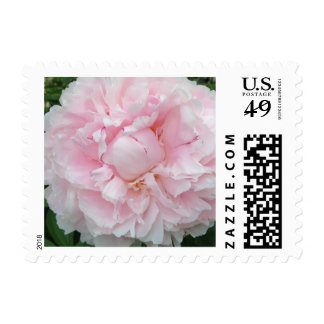 Pink Peony Flower Postage