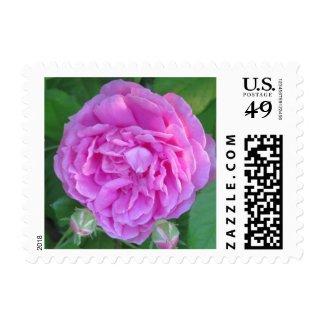 Pink Peony Flower Stamp