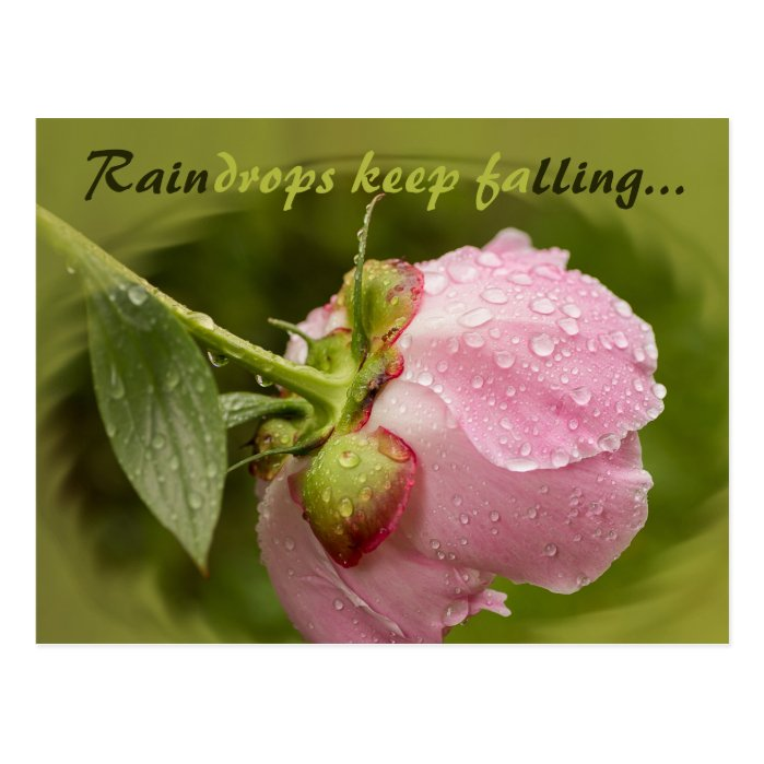Pink peony flower with glittering raindrops CC0506 Postcard