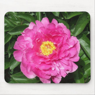 Pink Peony Flower With Yellow Center Mouse Pad