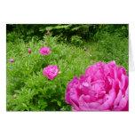 Pink Peony Garden Greeting Card