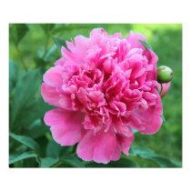 Pink Peony Photo Print