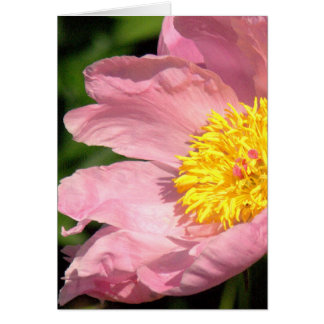 PINK PEONY (PHOTOG) CLOSE UP, GREETING CARD, BLANK CARD