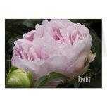 Pink Peony Photograph Cards