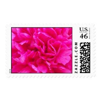 Pink Peony Postage stamp