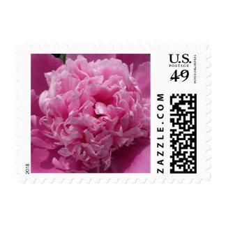 Pink Peony Postage