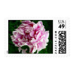 Pink Peony Postage Stamps