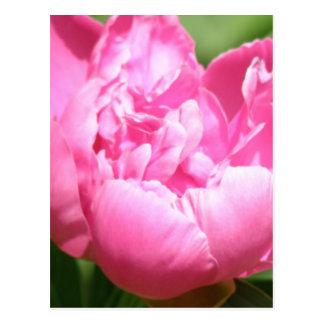 Pink Peony Postcard