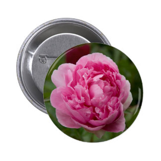 Pink Peony Rosa Pfingstrose Pinback Button